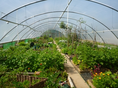 Lorn Organic Growers repaired polytunnels